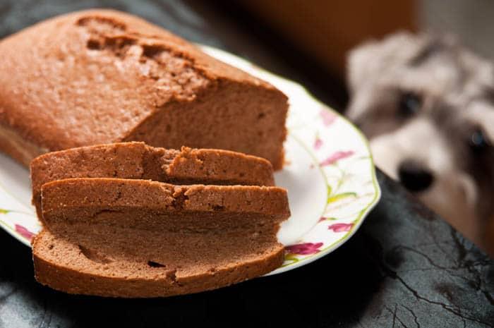 bizcocho de chocolate perrito