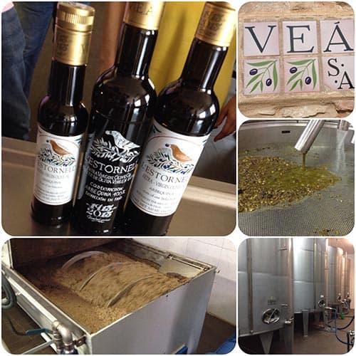 aceites de oliva lleida