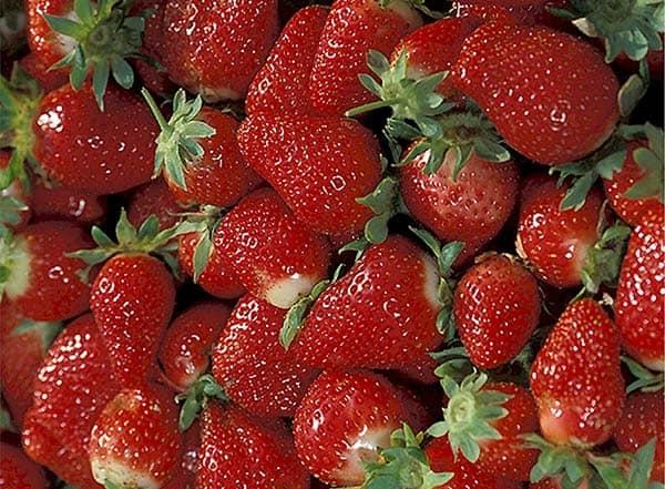 fresas mermelada
