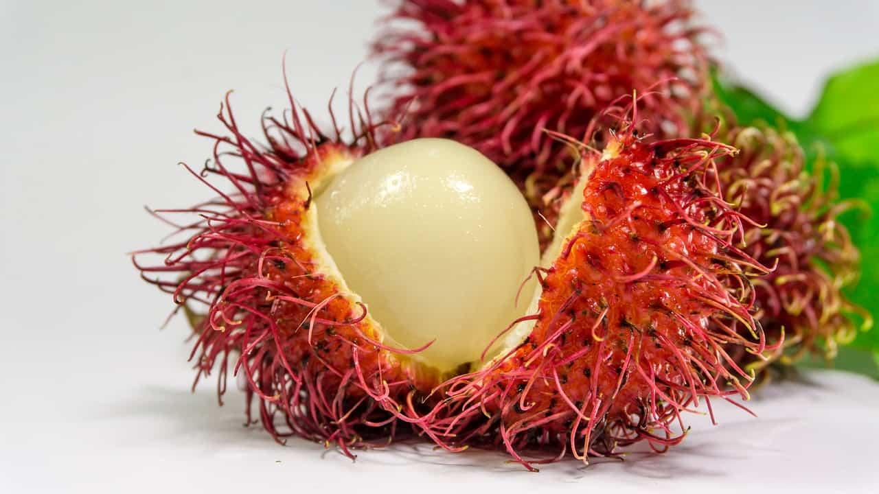 frutas exoticas rambutan