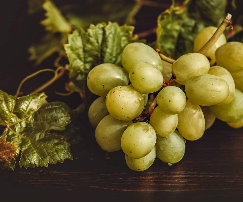 Uvas por Pixabay